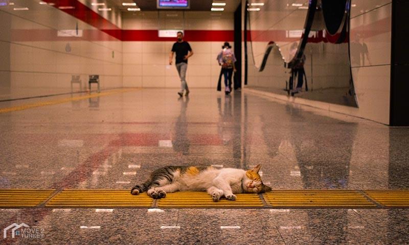 Istanbul Metro Cat