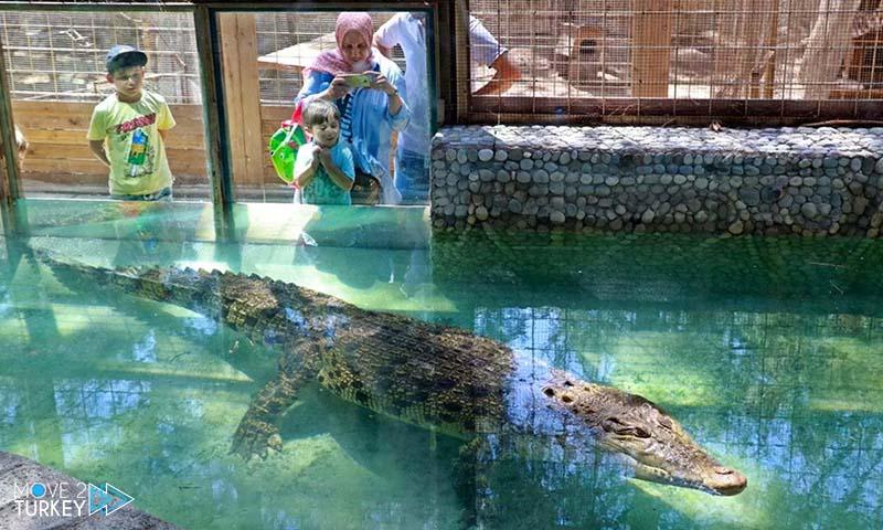 أكبر تمساح في تركيا في أنطاليا